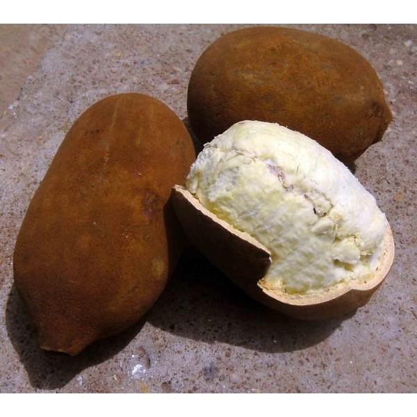Manteiga de Cupuaçu - 100gr Vegetal
