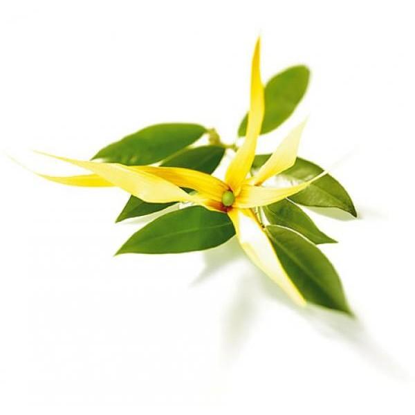 Óleo Essencial de Ylang-Ylang 20grs - 30ml