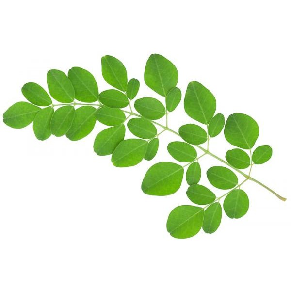 Óleo Vegetal de Moringa - 100 ml