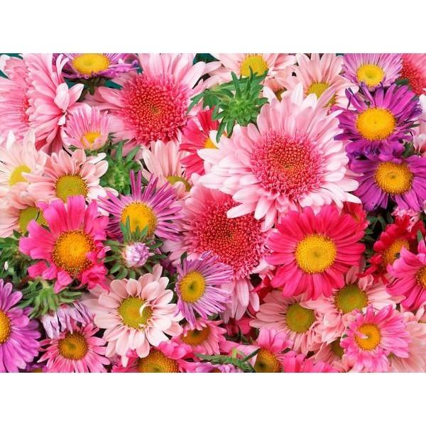 Essência Floral 50ml (lipossolúvel)