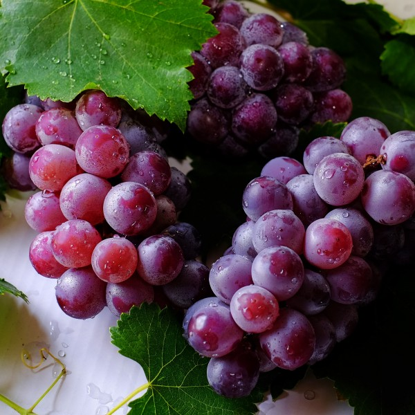 Óleo Vegetal de Semente de Uva Flora Fiora