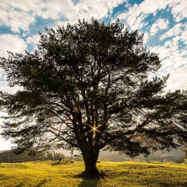 Árvore - Plantio de árvores para compensação de CO2